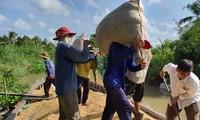 Mekong Delta farmers get bumper winter-spring crop