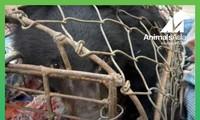 Moon bear cub rescued in Dien Bien province