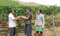 Life improved in Phieng Cai hamlet, Son La province
