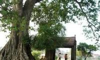 Visite de l'ancien village de Duong Lam