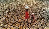 La Russie et l'Asie-Pacifique coopèrent pour garantir la sécurité alimentaire