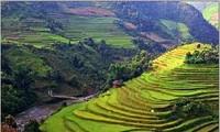 Prochaine semaine culturelle, sportive et touristique des rizières en terrasse