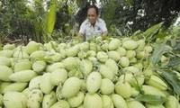 Agriculture bio: 6 ans après la mise en application des normes VietGap
