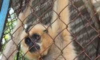 Concours d'écriture sur la lutte contre le trafic des espèces sauvages