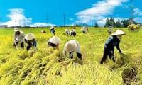 Améliorer la productivité agricole pour assurer la sécurité alimentaire