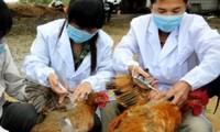 Le Vietnam est prêt à affronter la grippe A H7N9
