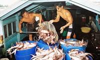 Les pangas vietnamiens sont parmi les poissons les plus consommés en Australie