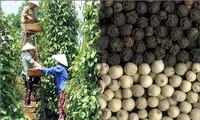 Poivre : les exportations pourraient dépasser 1 milliards de dollars en 2014