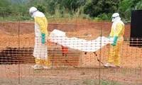 Ebola continue de progresser, les chiffres sous-évalués selon l'OMS