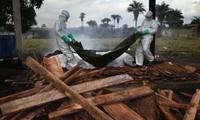 Le virus Ebola a fait près de 4.500 morts, selon l'OMS