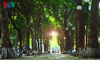 Hanoï, la saison des feuilles mortes