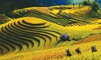 Semaine culturelle des rizières en terrasse de Mu Cang Chai