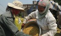 La protection sociale et la sécurité alimentaire dans la réduction de la pauvreté