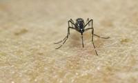 Le premier patient porteur du virus Zika sort de l'hôpital