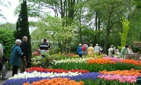 Le parc municipal de Dalat, le rendez-vous de mille fleurs
