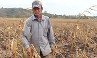 Plusieurs ONG aident le Vietnam à lutter contre la sécheresse et la salinisation