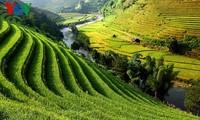 Mù Cang Chai: des rizières en terrasses