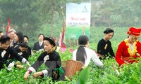 Tân Cuong reconnu destination touristique provinciale de Thai Nguyen