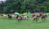 Dông Lâm – une destination idéale pour faire du camping