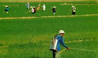 Peranan Himpunan Tani dalam membangun pedesaan baru.