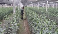 Mengaitkan produksi dengan pemasaran produk- Pengalaman tentang pembangunan pedesaan baru di provinsi Quang Ninh