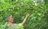 Mengembangkan peranan Himpunan Tani dalam pembangunan pedesaan baru