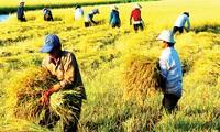 Pertanian Vietnam: Integrasi, tantangan dan kesempatan baru