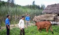 Daerah dataran rendah sungai Mekong berusaha mengurangi lebih dari 44.000 kepala keluarga miskin