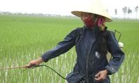 """Lokakarya """"Merekomendasikan ketentuan-ketentuan tentang keselamatan dan kebersihan kerja di bidang pertanian dalam RUU tentang Keselamatan dan Kebersihan Kerja"""