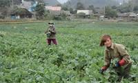Kecamatan San Thang, provinsi Lai Chau mengatasi kesulitan untuk membangun pedesaan baru