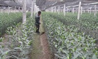 Front Tanah Air Vietnam aktif tutut membangun pedesaan baru