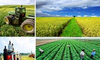 Pertanian menjamin ketahanan pangan, mengubah wajah pedesaan