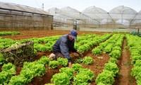 Kota Ho Chi Minh menyosialisasikan hasil pertanian organik dalam paket-paket wisata