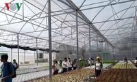 Daya sebar dari pola sayuran hidroponik yang dilakukan oleh wirausaha wanita daerah Nam Bo Barat