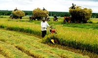 Kamboja memperhebat pengembangan ekspor beras