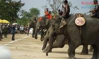 Lomba gajah yang bergelora di Dukuh Don-Provinsi Dak Lak