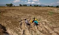 WB membantu Viet Nam memperkuat kemampuan menghadapi perubahan iklim