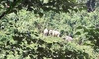 Bemühung zum Schutz von Wildtieren in Vietnam