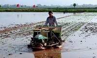Hanói impulsa la mecanización en la producción agrícola