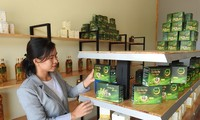 Ho Thi Kim Oanh contribuye a promover la marca de ginseng de Kon Tum