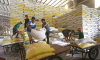 Unión Económica Euroasiática destina cuota arancelaria de 10 mil toneladas de arroz a Vietnam