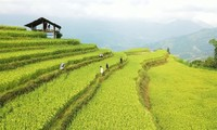 Ha Giang Culture and Tourism Week to honor Hoang Su Phi terraced fields