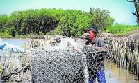 Nguyen Thanh Tuan, el guardián de los diques de Ca Mau