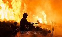 Incendios forestales en muchas localidades de España
