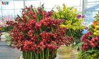 豊かさを繁栄する蘭の栽培