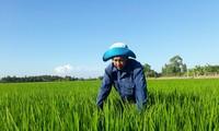 南部ソクチャン省での塩害対応
