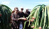 ビントゥアン省 農業観光の推進