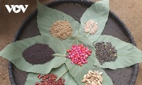 イエンバイ省の赤ザオ族の「殺虫の日」
