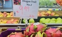 ベトナムのドラゴンフルーツ、豪市場も愛用される