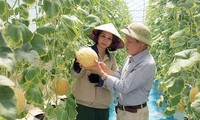 農業生産の再構築を集中的に行うフンイエン省
